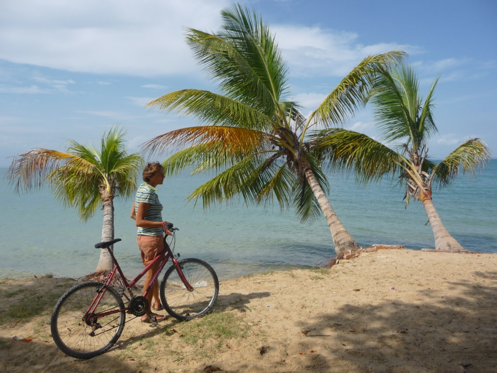 Christmas under palm trees, it's not a legend, just take your bike! <br> Ilha de Itaparica, Salvador de Bahia, Brazil by Google Translate