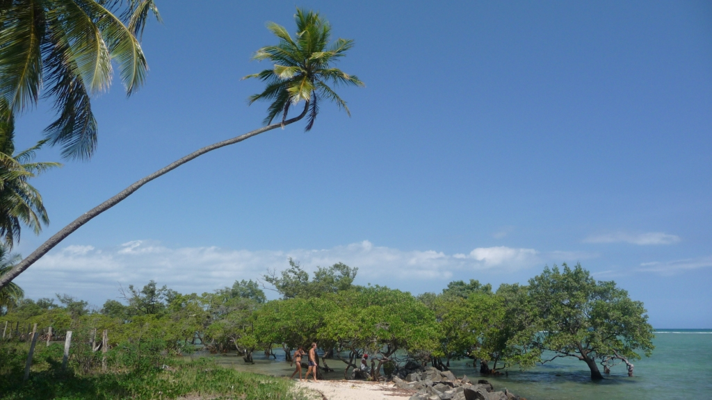 Between palm and mangrove, the ballad is bucolic. <br> Ilha de Itaparica, Salvador de Bahia, Brazil by Google Translate