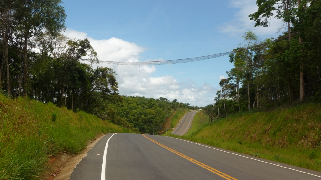 A monkey bridge, a real one. like that, unless they are crushed on the road. <br> Itacare, Bahia, Brazil by Google Translate