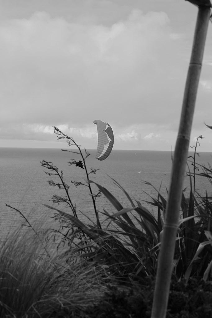 Revoir The Island Saison