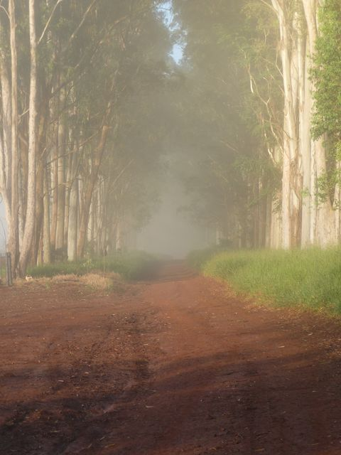 15 Mar 2009<br>In the morning, the fog seems to close a door on the mysterious path lined with tall trees. <br> Bernardo de Campo, Parana, Brazil