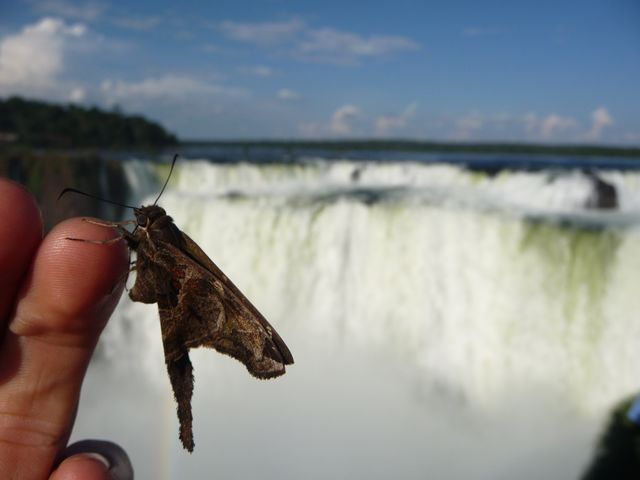 25 Mar 2009<br>The natural park of Iguacu is full of animals of all kinds, a naturalist's paradise, as well as for a photographer! <br> Iguazu Falls, Parana, Brazil