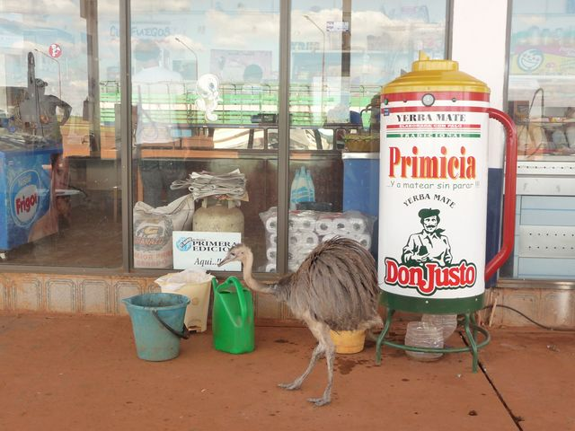 06 Apr 2009<br>In Argentina, there are: ostriches, mate. <br> Behind the large cylinder is a hot water dispenser. <br><br> Corrientes, Argentina