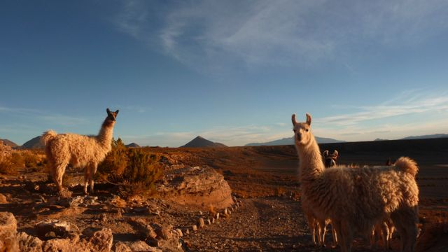 14 Sep 2009<br>The sheep are those of the Altiplano lovely llamas, still proud and enormously funny. I want a pillow for one day! The Salar white uniform ready to play special effects photos. In fact I am not so small, and no! Sud Lipez, Bolivia