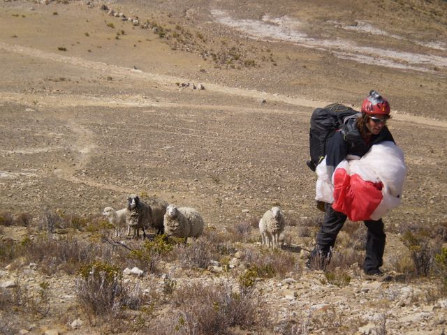 06 Oct 2009<br>These curious sheep follow me a quarter of an hour during my short climb to the peak of the island. They have seen in my sail folded one of them? Isla del Sol, Bolivia