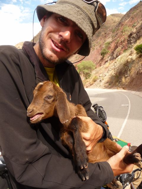 24 Oct 2009<br>On the edge of the road, goats bleat incessantly. Poor thing! Seb takes one in her arms and told him that all is well. It does not work, she bleats with a vengeance! Abancay, Peru