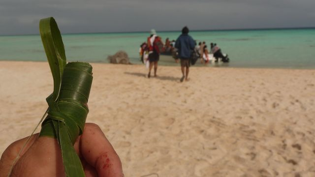 17 Jul 2010<br>Express dressing with the wad of tobacco and a tape of palm leaf. The sharp cut my thumb bleeding stops aussitôt.Makemo, Tuamotu Archipelago.